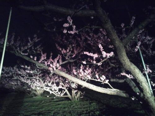 夜桜_f0325525_00010725.jpg