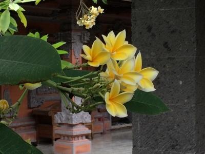 バリ島の旅\'17_e0097130_23304752.jpg