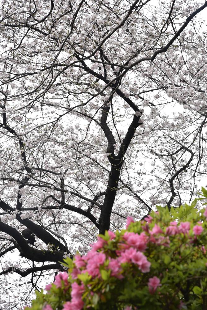 小石川後楽園_e0367330_21154245.jpg
