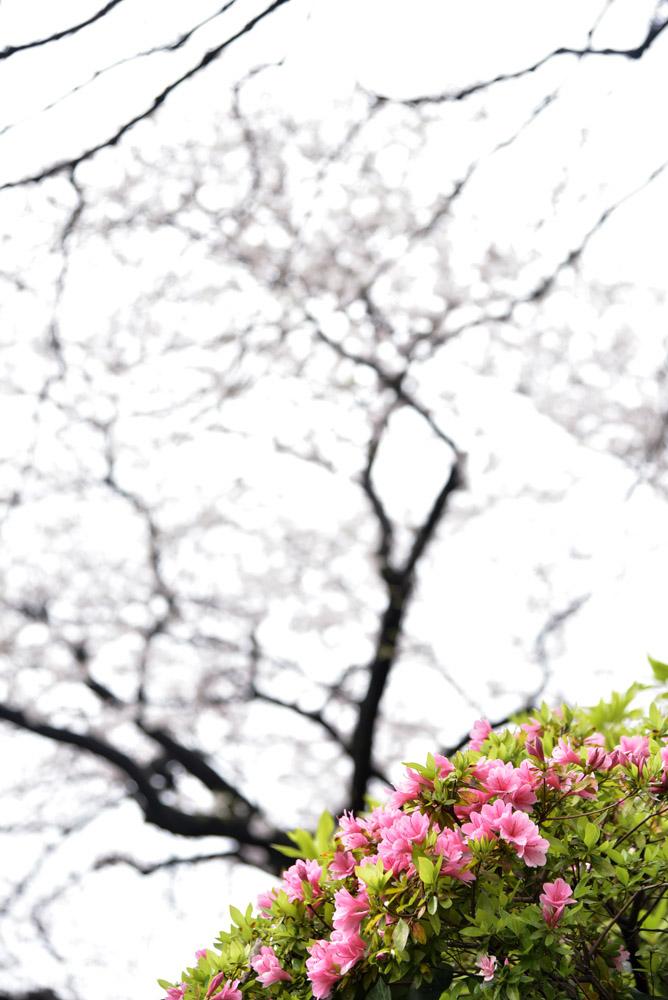 小石川後楽園_e0367330_21161521.jpg
