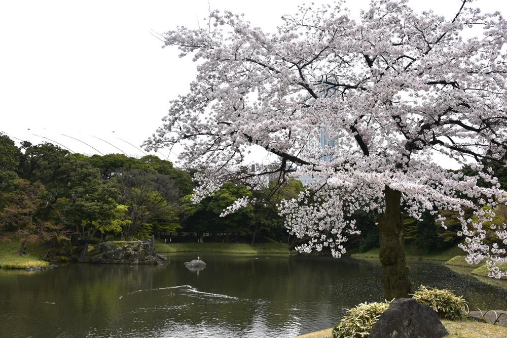 小石川後楽園_e0367330_21202121.jpg