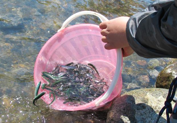 安家川と鮭稚魚放流会なのだ!_c0259934_10015695.jpg