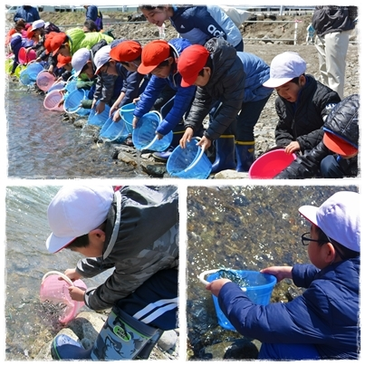 安家川と鮭稚魚放流会なのだ!_c0259934_10020735.jpg