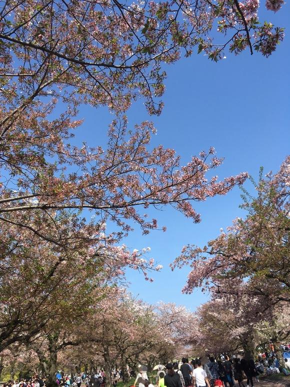 春がいらっしゃいました_b0209638_10242629.jpg