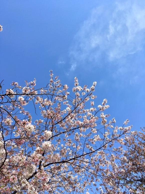 春がいらっしゃいました_b0209638_10302393.jpg