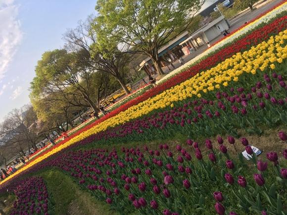 春がいらっしゃいました_b0209638_103529.jpg