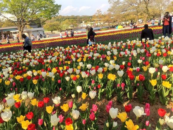 春がいらっしゃいました_b0209638_10382729.jpg