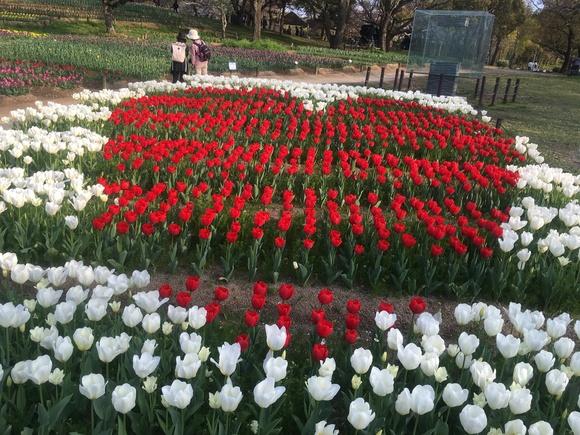 春がいらっしゃいました_b0209638_10392059.jpg