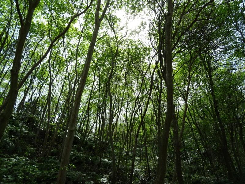 終日水運び・・・孝子の森  by  (TATE-misaki)_c0108460_20592911.jpg