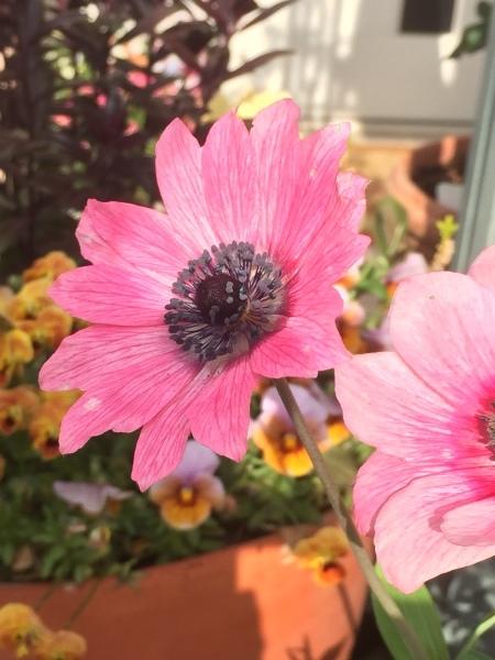 春のお花たちが次々咲いています_e0232798_17294269.jpg
