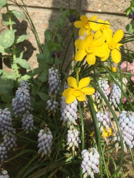 春のお花たちが次々咲いています_e0232798_17300926.jpg