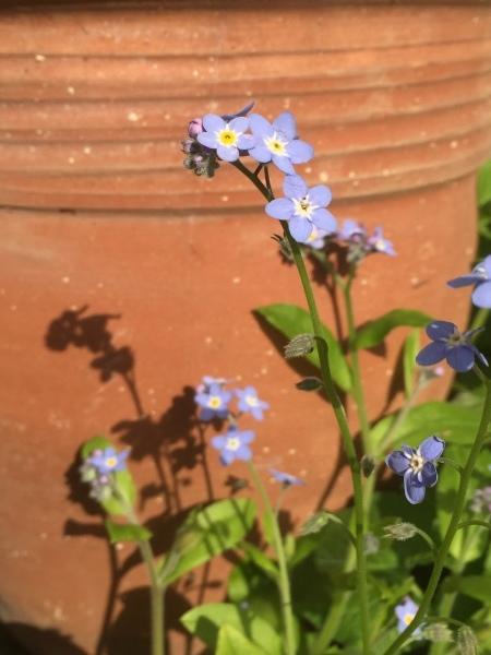 春のお花たちが次々咲いています_e0232798_17305308.jpg