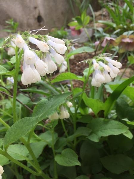 春のお花たちが次々咲いています_e0232798_17315062.jpg