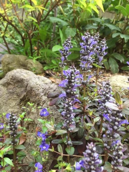 春のお花たちが次々咲いています_e0232798_17320505.jpg