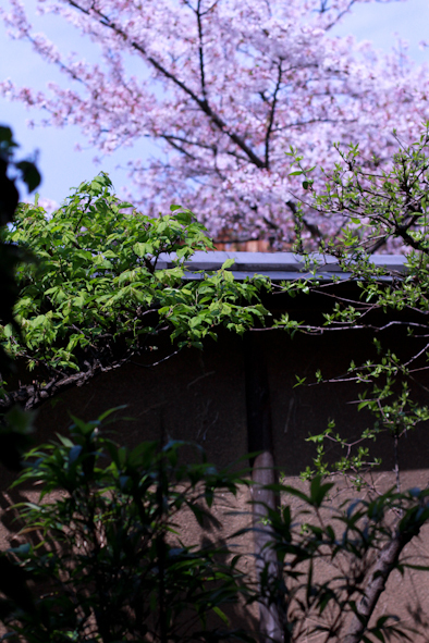 大人の遠足@祇園「白梅」2017春_b0208604_20124644.jpg