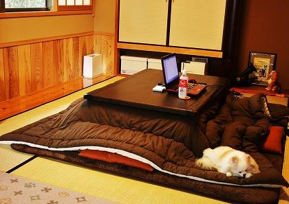 部屋とちび犬とわたし_d0360206_12263065.jpg
