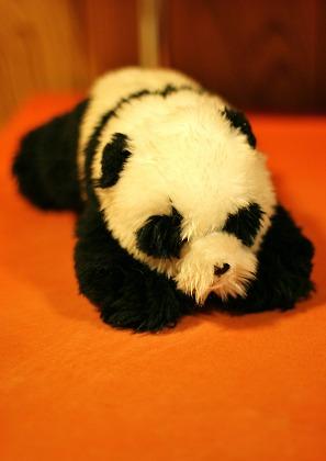 ライバルは大熊猫_d0360206_12272276.jpg