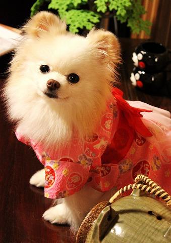 夏コレⅡ・桃色浴衣とお祭り法被_d0360206_12295688.jpg