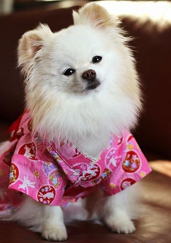 夏コレⅡ・桃色浴衣とお祭り法被_d0360206_12295891.jpg