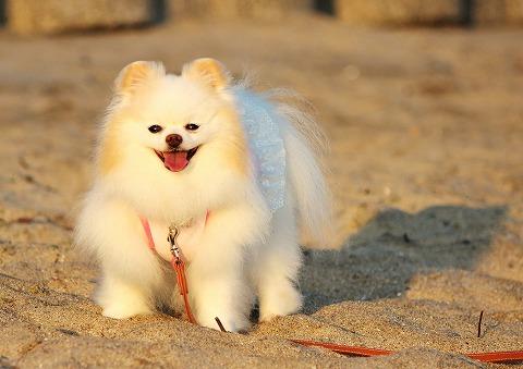夏と海辺と溢れる笑顔と_d0360206_12300617.jpg