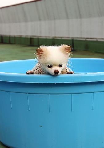 疲れた犬はいい犬だ_d0360206_12302259.jpg