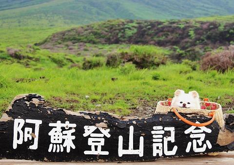 旅はポメ連れ・盛夏編_d0360206_12305863.jpg