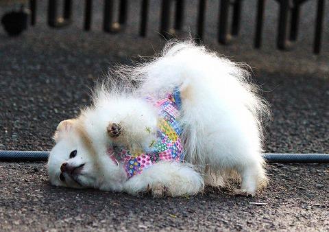 汚れっちまった愛犬に、_d0360206_12314871.jpg