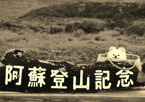 夏が過ぎ 風あざみ_d0360206_12322878.jpg
