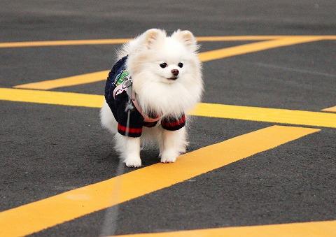 散歩途中に「これだけは!!」_d0360206_12355974.jpg