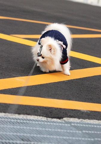散歩途中に「これだけは!!」_d0360206_12360001.jpg