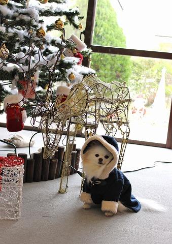 クリスマスツリーを探して_d0360206_12381222.jpg