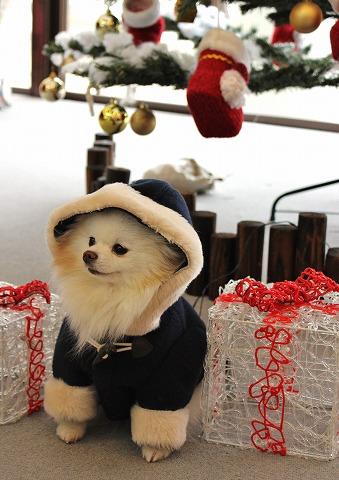 クリスマスツリーを探して_d0360206_12381366.jpg
