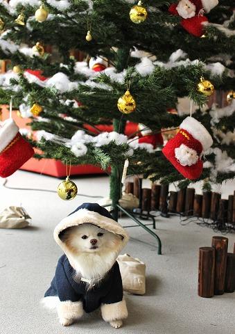 クリスマスツリーを探して_d0360206_12381460.jpg