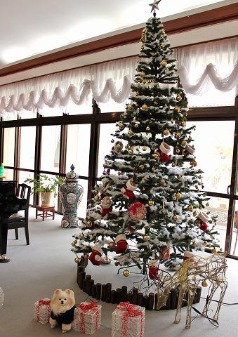 クリスマスツリーを探して_d0360206_12381501.jpg