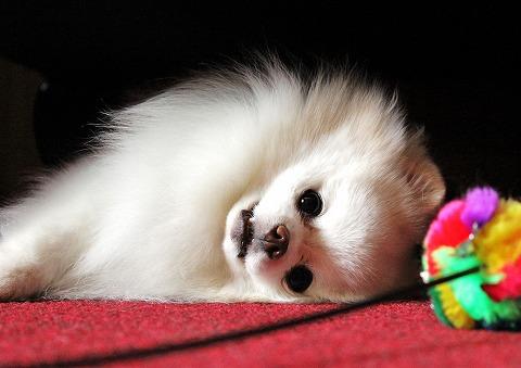 犬ブログでしょう?_d0360206_12453476.jpg