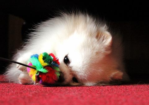 犬ブログでしょう?_d0360206_12453585.jpg