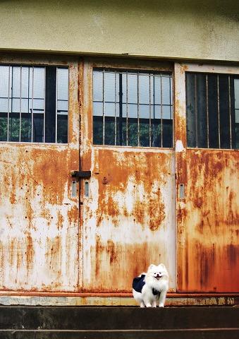 廃校と浴衣とポメラニアン_d0360206_12461926.jpg