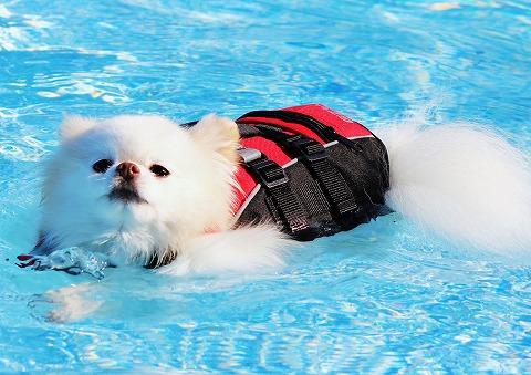 ゆきはもう泳げない_d0360206_12475086.jpg