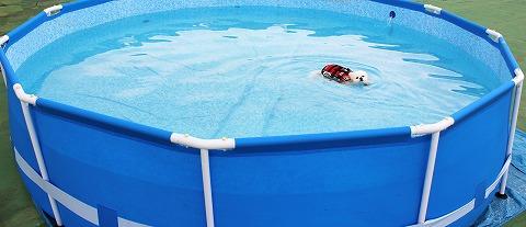 ゆきはもう泳げない_d0360206_12475182.jpg