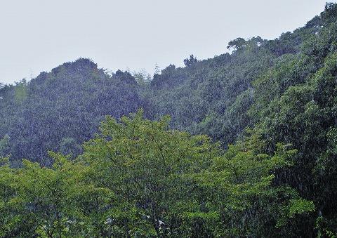 雨とお盆とファッションショー_d0360206_12491773.jpg