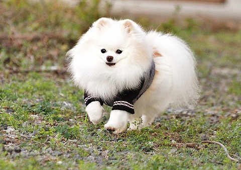 Good girl !!_d0360206_12543559.jpg