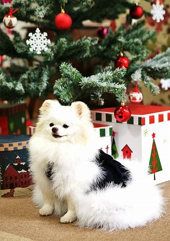 クリスマス大好き_d0360206_12544793.jpg