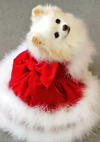 クリスマス大好き_d0360206_12544807.jpg
