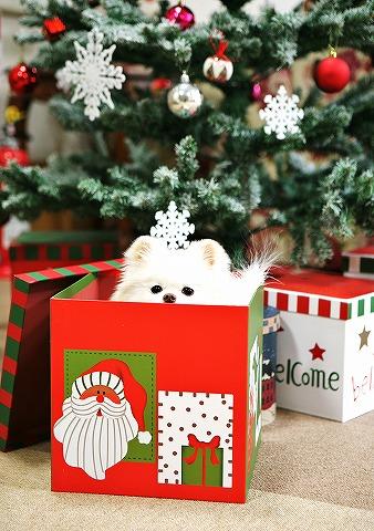 クリスマス大好き_d0360206_12544884.jpg