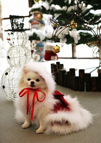 クリスマス大好き_d0360206_12544955.jpg
