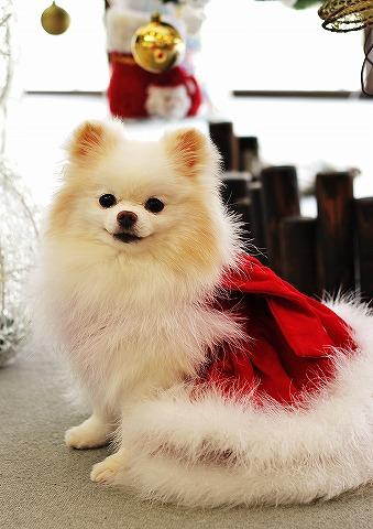 クリスマス大好き_d0360206_12545052.jpg