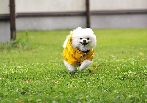 幸せの黄色いカッパ_d0360206_13040890.jpg