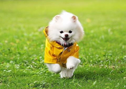 幸せの黄色いカッパ_d0360206_13040981.jpg