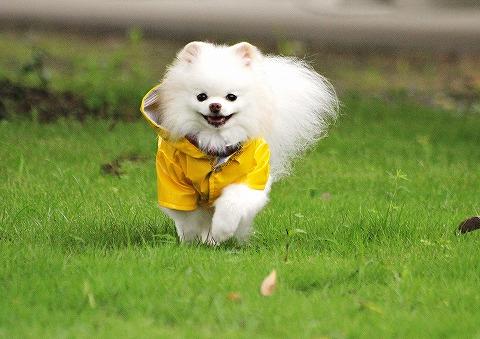 幸せの黄色いカッパ_d0360206_13041067.jpg