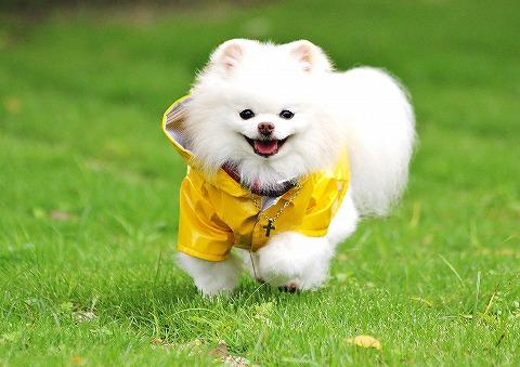 幸せの黄色いカッパ_d0360206_13041083.jpg
